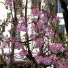 Wiosna w mieście już rozt<br />acza swe uroki:))