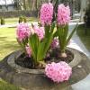 Wiosna ach to Ty :) Dziek<br />uję za cudowna dedykacje <br />:)))
