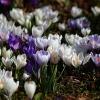 Wiosenny dywanik w rewanż<br />u