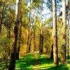Las się budzi do życia...
