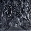 Dark hedges ::