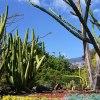 Kaktusowe  klimaty :P