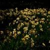 Siedem mgnień wiosny ::