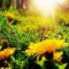 Wiosna na jednym obrazku