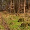 Tylko ziemia zielona i wi<br />osennie radosna... ::