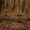 W strasznym lesie ::