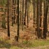 Jakoś jesiennie wygląda w<br />iosna w Puszczy Darżlubsk<br />iej... ::