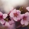 Wiosna, ach to Ty...