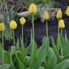 Powitanie wiosny