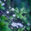 wiosna! ::     Facebook - zapraszam do polubienia
