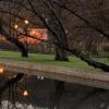 W parku jeszcze goło... ::