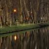 Stawy parkowe... ::                      Te b<br />iałe słupki to ogrodzenie<br /> &quot;elektryczny pastuc<br />h&quot; mający chroni�