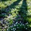 dywan z kwiatów ::