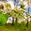Leśne kwiaty