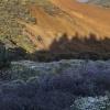 Cynamonowe wzgórza