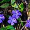 Wiosenne kwiatki ::