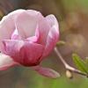 Królowa wiosny:)