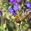 Nasze kolibry 2
