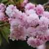 Wiosenna gałązka na powit<br />anie dla Was