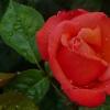 Miłego dnia życzę: )))