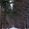 Wielki las małych ludzi