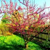 primavera ::