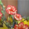 Goździkowo z wazonu