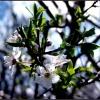 Wiosna radosna!
