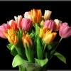 Zabawa w tulipany