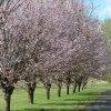 Wiosenny szereg