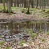 Leśne kałuże - spacer po <br />deszczu...🌲  :: 🌲 Las na Grabówku w Gdyni<br /> 🌲         Serdecznie poz<br />drawiam wszystkich i życz<br />ę miłego, dług
