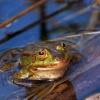 niejaki żab