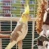 Dziś po południu zrobiło <br />się tak ciepło, że aż żal<br /> było nie wyjść na balkon<br /> złapać trochę słoneczka!