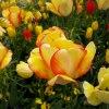 Kwiaty z przestrzeni sąsi<br />edzkich krajów...