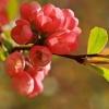 Uroki wiosny:)