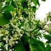 🍃Kwitnące kwiaty bzu, sło<br />neczny maj, 💕 serca zakoc<br />hane  💑.