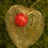 &quot;Miłość jest czymś n<br />ajmocniejszym na świecie,<br /> a jednak nie można wyobr<br />azić sobie nic bardziej s<br />kromnego.&quot;