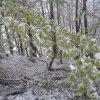 GDYNIA ✽ Majowy powrót zi<br />my - dzisiejszy spacer w <br />lesie ✽ - zdjęcia z telef<br />onu :: ✽ Spacer z Puszkiem w les<br />ie ✽                Pozdr<br />awiam wszystkich !  ✽ ✽ ✽<br /> ✽ ✽ ✽ �