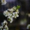 pąki kwiatowe kwitną kolo<br />rowe