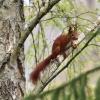 wiosenny rudzielec na mił<br />y weekend