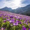 Najpiękniejsza wiosna jes<br />t w górach!!