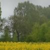 Rano mgła przez Kaszuby s<br />zła... ::