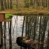 Mała retencja wodna w las<br />ach... ::
