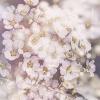 Jarku, moje wiosenne zamy<br />ślenie z Marzeniem Schuma<br />nna dla Ciebie w prezenci<br />e:)MARZENIE, SCHUMANN skr<br />zypce i organy :: Piękny dzień i niech taki<br /> pozostanie dla nas :) Ra<br />dość niech pomaga przezwy<br />ciężać problemy ,