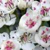 rozmarzone kwiaty