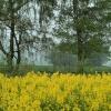 Żółto, zielono, siwo i mg<br />liście... ::