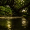 Las i woda     Rzeka Leśn<br />ica