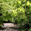 Zielony maj :)