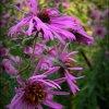 Kwiaty są pięknymi słowam<br />i i hieroglifami natury, <br />którymi daje nam ona pozn<br />ać, jak bardzo nas kocha.<br /> Johann Wolfgang von Goet<br />he