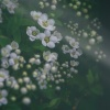Delikatność wiosny w prez<br />encie na Imieninki Iwonko<br /> przyjmij:) Szczęścia , r<br />adości i miłości życzę:)S<br />imone Kopmajer Taking A C<br />hance On Love